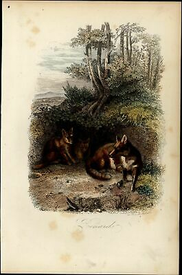 Foxes den Reynard mammals Red Fox 1854 Cuvier Natural History hand color print