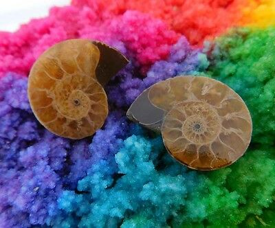 42 Cts. 100% Natural Matched Pair Of Ammonite Shell  Mineral Specimen (NH106)