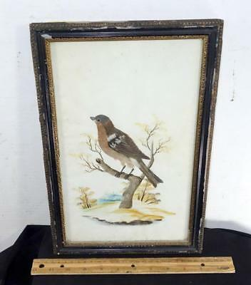 Beautiful Victorian Real Feather Bird Water Color Art Work Painting In Frame !