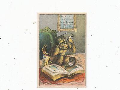 C7451  Victorian Trade Card Malley & Co  New Haven  Ct Monkey Shoes