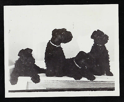Old Vintage Antique Photograph Four Adorable Black Puppy Dogs