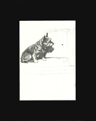 "Vintage Cairn Terrier Dog Print by Cecil Aldin 8X10"" Matted 1934"