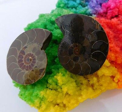 125 Cts. 100% Natural Matched Pair Of Ammonite Shell  Mineral Specimen (NH92)