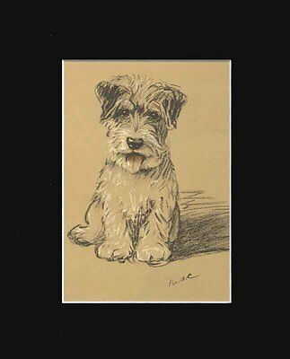 Sealyham Terrier Puppy Dog Setting  Print 1937 by Lucy Dawson 8 X 10 BLACK MAT