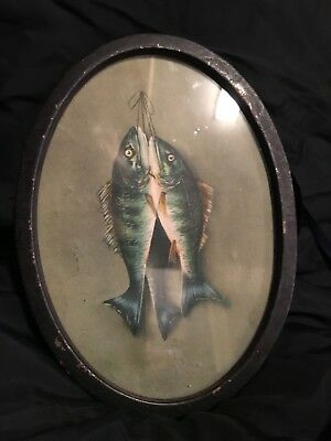 Beautiful Antique Fish Hanging Still Life Victorian Era Print Original Old Frame