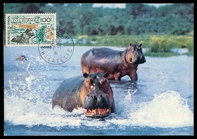SENEGAL MK 1963 FAUNA NILPFERD HIPPO MAXIMUMKARTE CARTE MAXIMUM CARD MC CM h0679