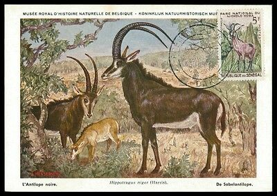 SENEGAL MK 1960 FAUNA ANTILOPE ANTELOPE MAXIMUMKARTE MAXIMUM CARD MC h0680