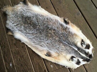 SELECT XL BADGER Fur Pelt Skin Taxidermy Hunting Tanned Log Cabin Decor coyote