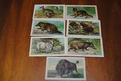 7 Victorian Trading Cards Arbuckle Bros Coffee Co Animals Series