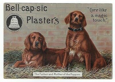 Bell-Cap-Sic Plasters late 1800's medicine trade card - dog image