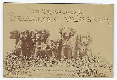Dr. Grosvenor's Bellcapsic Plaster late 1800's medicine trade card - dog image