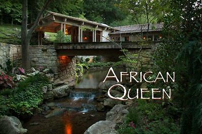 The African Queen!!   An  INCREDIBLE 10 Year Journey - OUT OF THIS WORLD!