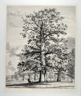 Jacob George Strutt 1824 - The tall Oak at Fredville Eiche old forest tree bäume