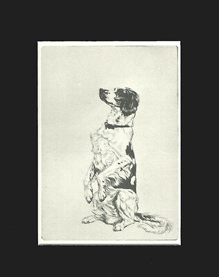 English Setter Dog Print 1932 by Diana Thorne 8 X 10 Matted