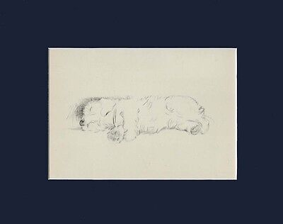 "Sealyham Terrier Dog SLEEPING Sketch by Lucy Dawson 1946  8X10"" Matted Print"