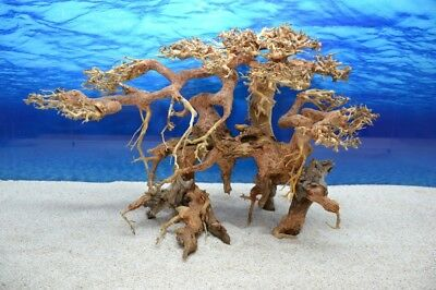 Bonsai Baum XL Wurzel Holz Aquarium Deko Aquascaping Wurzel original Foto Nr.621