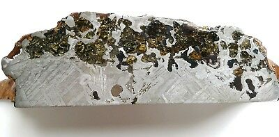 2625 gram SEYMCHAN pallasite - BEAUTIFUL CRYSTALS  - large slab