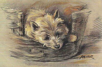 Cairn Terrier Dog by Lucy Dawson 1930s ~ LARGE New Blank Note Cards