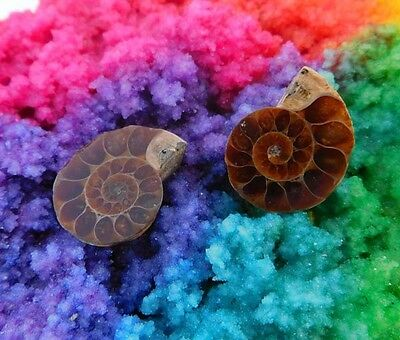 26 Cts. 100% Natural Matched Pair Of Ammonite Shell  Mineral Specimen (NH119)