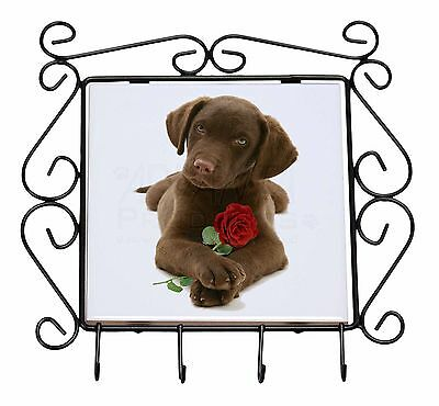 Chocolate Labrador Pup with Rose Wrought Iron Key Holder Hooks Christ, AD-L53RKH