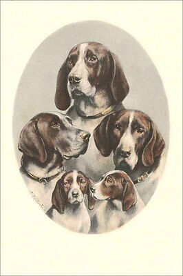 Pointer Dogs & Pups Carl Reichert Drawing pre 1900 - LARGE New Blank Note Cards