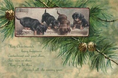 Dachshund Dog Puppies 1908 Carl Reichert - LARGE New Blank Christmas Note Cards