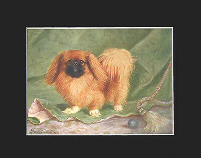 Antique Print 1907 Pekingese Dog Signed by Lilian Cheviot  9X12 Matted