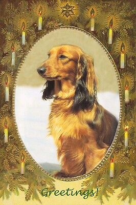 Dachshund Dog Christmas Greetings - LARGE New Blank Christmas Note Cards