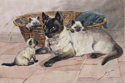 Siamese Cat w Kittens Drawing by Mabel Gear 1940s - LARGE New Blank Note Cards