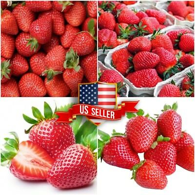 Red 300pcs Strawberry Climbing Strawberry Fruit Plant Seeds Home Garden Deliciou