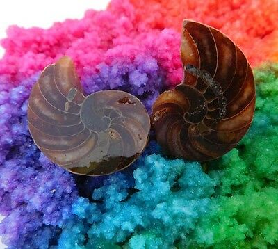 80 Cts. 100% Natural Matched Pair Of Ammonite Shell  Mineral Specimen (NH86)