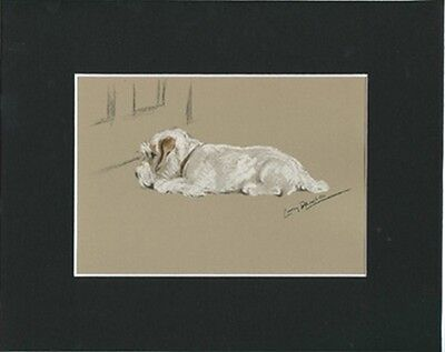 Sealyham Terrier Dog Print 1946 by Lucy Dawson 8 X 10 Matted WAITING!