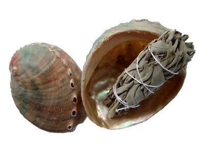 Abalone Shell Smudge Bowl + White Sage Smudge Stick - Small