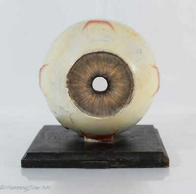 Antique German Anatomical Human Eye, Paper Mache and Glass Lens, Paper w/ Label