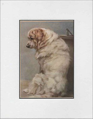Antique Great White Pyrenes Dog Print by Maud Earl 1912 8x10 Matted