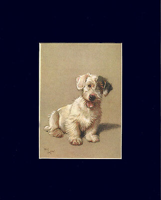 VINTAGE Sealyham Terrier Dog 1928 Print by Cecil Aldin  8 X 10