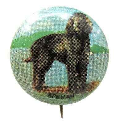 1930's AFGHAN Dog tin litho pinback button