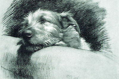 Irish Wolfhound Dog Cecil Aldin 1930's  ~ LARGE New Blank Note Cards