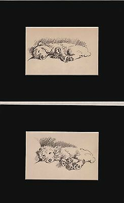 TWO Vintage Poodle Dog Sketch Print (s) by Lucy Dawson 1940 Matted 8X10 CUTE!