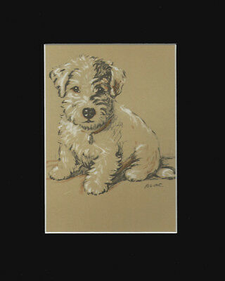 Sealyham Terrier SWEET Puppy Dog Setting  Print 1937 by Lucy Dawson 8 X 10