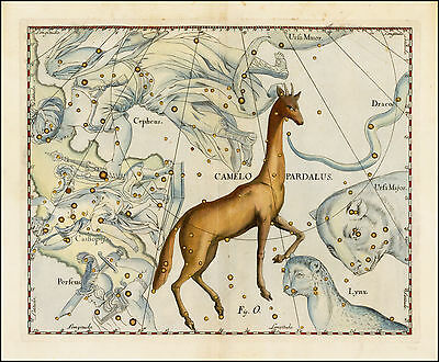 1687 old CELESTIAL MAP constellation Hevelius CAMELOPARDALIS zodiac CAMEL 22