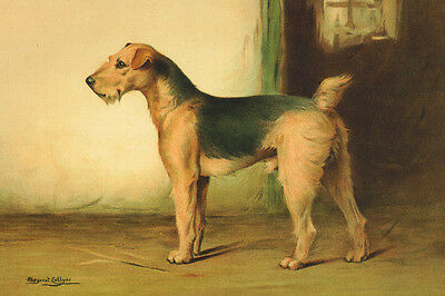 Airedale Terrier Dog  Painting by Margaret Colyer 1908 ~New  Large Note Cards
