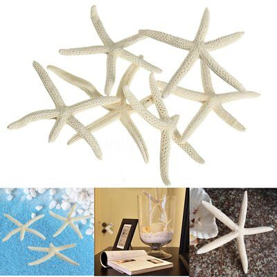 "6Pcs Natural 2-4"" White Finger Starfish Beach Coastal Wedding Craft Home Decor"