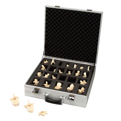 Suitcase Set of 24 Vertebrae Bonelike Vertebrae  1 EA
