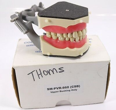 Columbia dentoform typodont SM-PVR-860 Good condition with full set of teeth