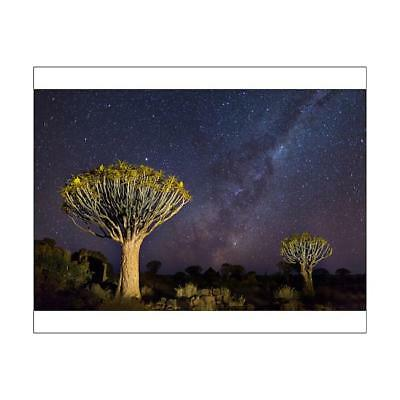 """14555359 10""""x8"""" (25x20cm) Print Quiver Trees with Milky Way at Gi..."""