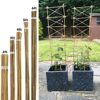 Heavy Duty Professional Bamboo Strong Plant Support Garden Canes | 6Ft - 7Ft