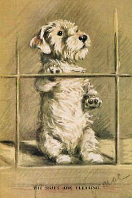 Sealyham Terrier Dog by Lucy Dawson 1930's 8  LARGE New Blank Note Cards CUTE!