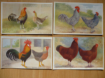 4x  THE FEATHERED WORLD VINTAGE  POSTCARDS POULTRY   (LOT 2)