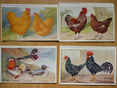 4x  THE FEATHERED WORLD VINTAGE  POSTCARDS POULTRY   (LOT 6)